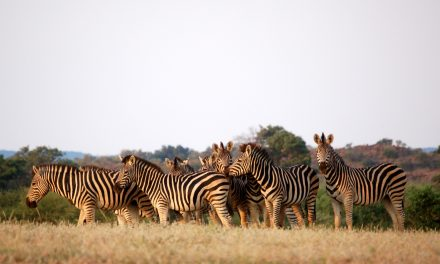 7 Wild Team Building Ideas for Your Company